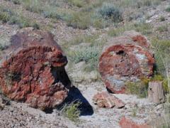 A fost descoperita cea mai veche padure din lume