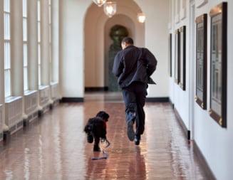 "A murit cainele familiei Obama: ""Niciodata nu a muscat. Ii placea sa sara in piscina vara"""