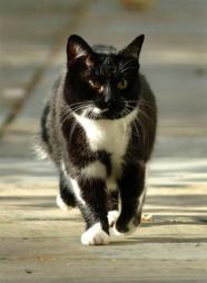 A murit pisica de la Downing Street