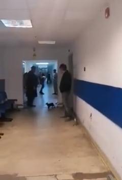 A plouat cu pisici intr-un spital din Constanta. Doua feline au cazut din tavan peste un pacient