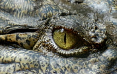 A supravietuit trei saptamani intr-o padure tropicala plina de crocodili