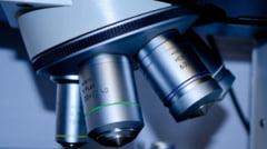 ADN-ul animalelor, cheia pentru a afla secretele pergamentelor de la Marea Moarta