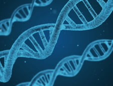 ADN-ul olandezului a fost gasit in probele biologice ridicate in cazul fetitei din Dambovita. Interpolul confirma ca a murit
