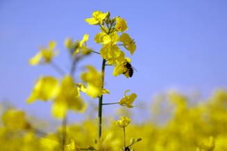 AFIR este alaturi de crescatorii de albine si procesatorii de produse apicole din Romania cu ocazia Zilei Mondiale a Albinei