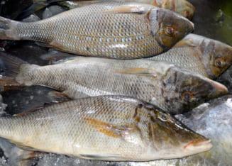 ANALIZA De ce s-a prabusit productia nationala de peste: concesionari si exploatari prost facute, lipsa ambarcatiunilor si pescuitul ilegal