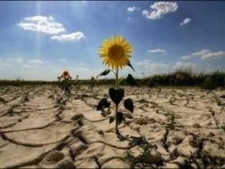 ANM: Seceta se va mentine in regiunile agricole sudul si estul tarii