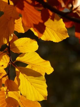 ANM anunta ca vremea se incalzeste: Multe zile cu soare in octombrie