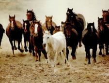 ANSV a oprit pentru o perioada transporturile de animale din Tulcea