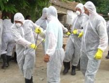 ANSVSA: Aproximativ 530 de focare de pesta porcina, active in Romania