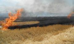 ATENTIE - Agricultorii care dau foc la miristi pierd subventiile