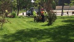 Administratia locala continua lucrarile de igienizare in Constanta