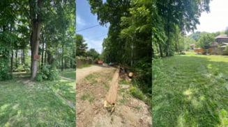 Administratie eficienta: La Pausesti Otasau, scolile sunt aprovizionate cu lemne din padurea proprie a primariei