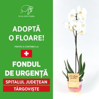 Adopta o floare pentru a ajuta bolnavii de COVID-19 din Dambovita