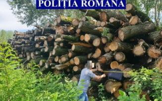 Afaceri ilegale in Baragan. Politia a confiscat peste 700 metri cubi de lemne
