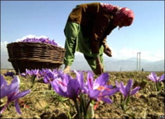 Afganistan: Unii fermieri incep sa renunte la culturile de opiu. Iata ce pun in loc