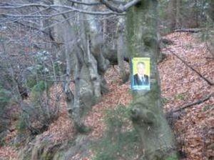 Afise electorale, lipite si pe copacii din padure