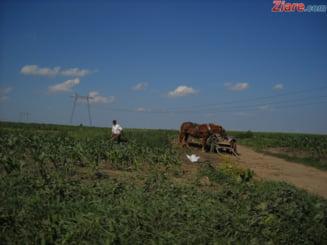 Agricultorii, nemultumiti de impozitarea veniturilor: Suntem spoliati mai grav ca in vremurile de trista amintire