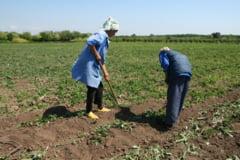Agricultorii hunedoreni isi primesc integral subventiile pe suprafata, din decembrie