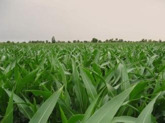 Agricultura eco din Romania, favorizata de utilizarea ingrasamintelor naturale