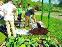 Agricultura ecologica, subventionata de stat pana vin banii de la UE