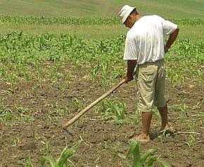 Agricultura va asigura o treime din cresterea economica in 2008