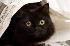 Ai pisica? Riscul de sinucidere e mare