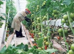 Ajutoare de minimis pentru agricultura ecologica