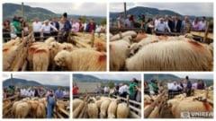 Ajutor de minimis de 2 lei/kg primit de crescatorii de ovine pentru comercializarea lanii