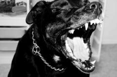 Alba Iulia: O femeie a fost muscata de un pitbull lasat liber. I-a ucis si cainele si a atacat politistii