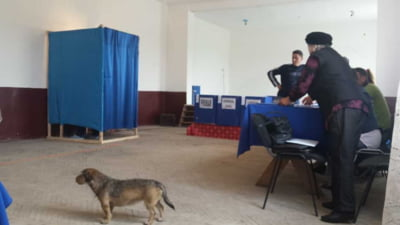Alegeri parlamentare 2020. Mehedinti, Olt si Teleorman in topul prezentei la vot pana la ora 9.00