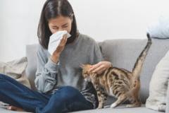 Alergenii si pernele. Cum iti protejezi sanatatea in sezonul alergiilor