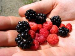 Alimente indicate pentru diabetici