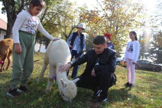 Alpaca Legion, in vizita la copiii bolnavi incurabil de la Adunatii Copaceni