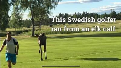 """Ambasada Suediei din București, reacție după ce Iohannis a recomandat golful: """"Doar dacă faci și jogging"""" VIDEO"""