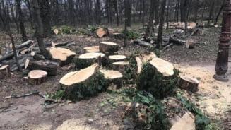 Amenda de 50.000 de lei pentru masacrarea copacilor din Herastrau. Banii, platiti tot din buzunarul cetateanului