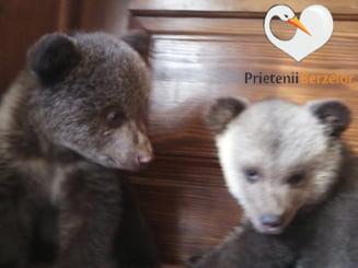 Amenda revoltatoare primita de o asociatie care a salvat doi ursuleti de la moarte sigura. Cum a fost ajutata de voluntarii mobilizati pe Facebook