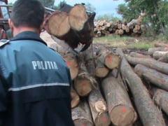 Amendati pentru lemnele pe care le transportau