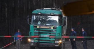 Amenzi consistente si lemne confiscate