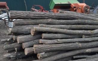 Amenzi de 40 000 lei, aplicate in Arges, intr-o saptamana, hotilor de lemne
