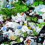 Amenzi mari pentru gunoaie date primariilor valcene