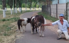 "Andreea Tonciu, mascota statiunii Amara. Ingrijitorii complexului balnear au botezat un ponei cu numele asistentei TV: ""Seamana cu ea cand rade"""