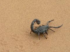 Fecioara femeia scorpion cu barbatul Cum sa