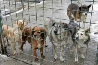 Angajatii unui adapost din Oradea, cercetati penal pentru torturarea cainilor