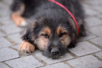 Animal Life continua seria campaniilor de castrari gratuite