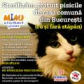 Animal Society lanseaza o noua campanie de sterilizare gratuita a pisicilor, cu sau fara stapan