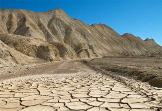 Animale si plante care rezista in Valea Mortii prin adaptari uimitoare (Galerie foto)