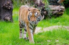 Animalele de la Circul Globus care au supravietuit incendiului vor ajunge in Africa
