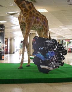 Animalele de la Muzeul Antipa invadeaza orasul
