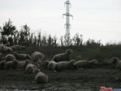 "Animals International da in judecata Guvernul Romaniei pentru ""tortura planificata asupra animalelor"""