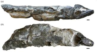 Ansoa gigantice faceau legea in adancuri, in urma cu zeci de milioane de ani